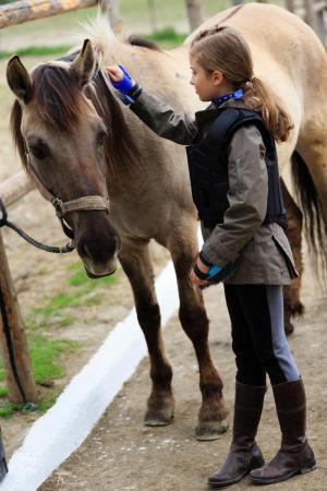 HorseMedicineEuropeNovelTherapyStemCell