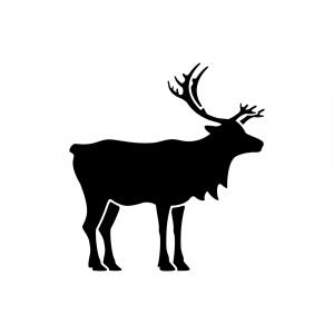 Reindeer pictogram approved for use in latest veterinary QRD template